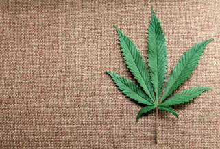 File photo of a marijuana leaf at Canna Pi medical marijuana dispensary in Seattle